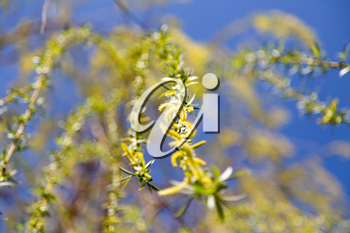 flowers on the tree in nature willow