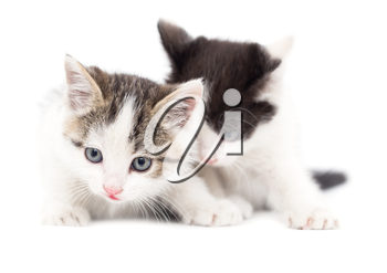 Two small kitten on a white background