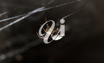 spider on a web. macro