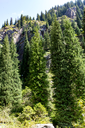 beautiful Christmas tree in the mountains in summer