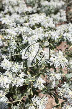 white flowers in nature