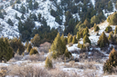 Coniferous tree in the mountains in Kazakhstan in nature