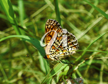 Butterfly on green grass background