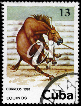 CUBA - CIRCA 1981: A Stamp printed in CUBA shows the image of the Horse, value 13c, series, circa 1981