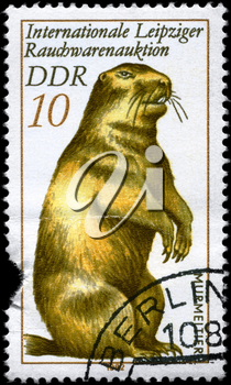 GDR - CIRCA 1982: A Stamp printed in GDR shows image of a Marmot from the series Intl. Fur Auction, Leipzig, circa 1982