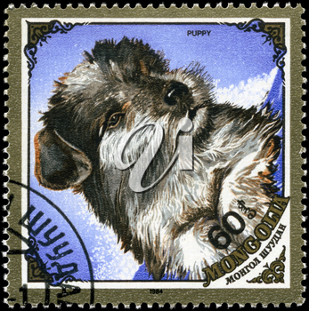 MONGOLIA - CIRCA 1984: A Stamp printed in MONGOLIA shows image of a Puppy from the series Dogs, circa 1984