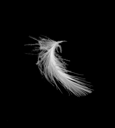 Royalty Free Photo of a Feather