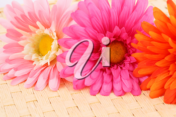Colorful fabric daisies on bamboo background, closeup picture.