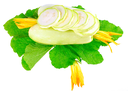 White vegetable  marrow with green foliage and yellow blossom on white background. Isolated over white