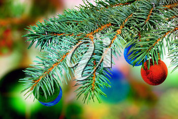 Christmas and New Year decoration-balls on fir tree.