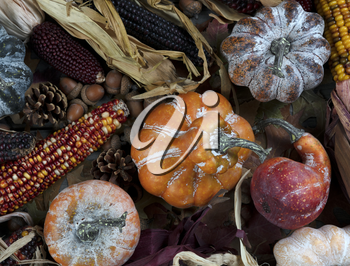 Seasonal autumn decorations consisting of pumpkins, gourds, and corn for Thanksgiving or Halloween holiday concept