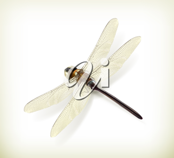 Dragonfly, realistic vector