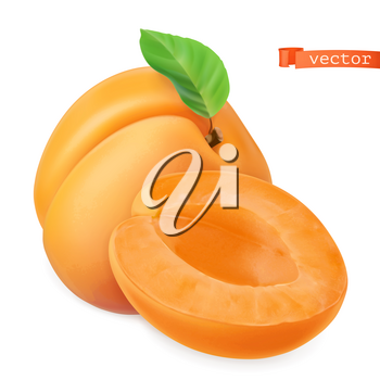 Apricot vectorized image. Fresh fruit. 3d realistic vector icon