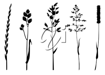 set of grasses silhouettes isolated on white