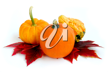 Mini pumkins with autumn leaves on white background