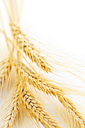 Ripe wheat ears close up with copy space