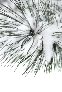 Macro of a pine branch covered with snow, single snowflakes visible at full size