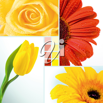 Collage of yellow tulip, rose and two herberas
