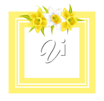 Decorative frame for photo or text with spring flowers daffodil narcissus plant, flowers with white or pale outer petals vector illustration greeting card