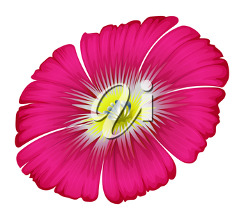 Illustration of a pink flower on a white background