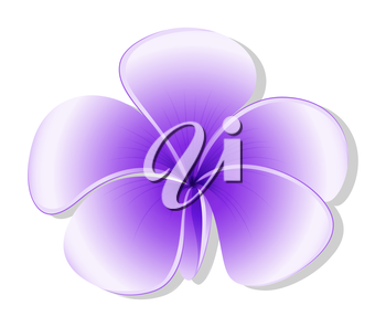 Illustration of a violet flower on a white background