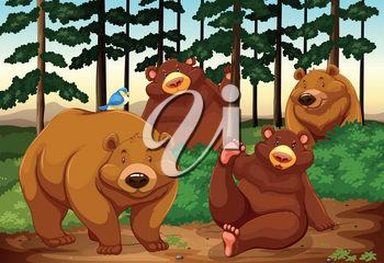 Four bears in a jungle