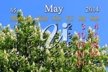 calendar for May of 2014 on the background of crowns of chestnut