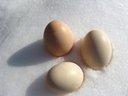 three eggs of hen lying on the snow