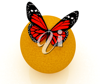 Red butterflys on a oranges on a white background