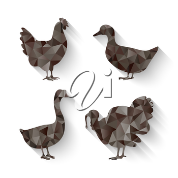 domestic fowl triangle symbol - vector illustration. eps 10