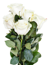 side view of bunch of white roses isolated on white background