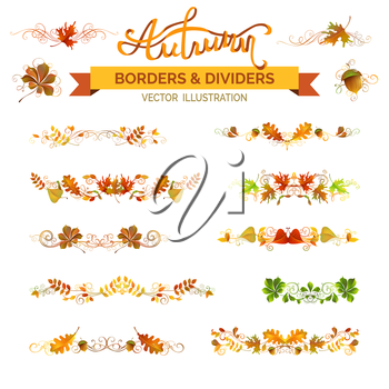 Vector nature design elements isolated on white background. Oak, rowan, maple, chestnut, elm leaves and acorn. Swirls and flourishes.