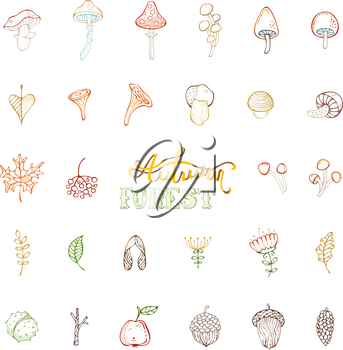 Linear hand-drawn mushrooms, acorns, fly agaric, chestnut, chanterelles, apple, rowan berries, flowers, autumn leaves and maple seeds isolated on white.