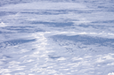 Snow hummocks on the surface of frozen pond