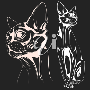 Monochrome bald cat, a set of two objects the head of a cat and the cat entirely. Vector illustrations