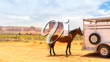 Horse near the trailer. Monument valley travaling.
