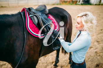 Female rider preparing a horse saddle, horseback riding. Equestrian sport, young woman and beautiful stallion, farm animal