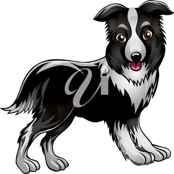 Funny illustration with collie drawn in cartoon style