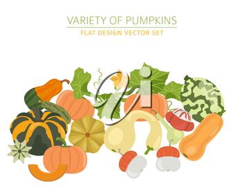 Variety of pumpkins. Flat design set. Vector illustration