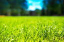 Horizontal green grass bokeh background