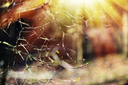 Horizontal spring branches with light leak bokeh background