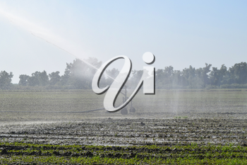 Irrigation system in the field of melons. Watering the fields. Sprinkler.