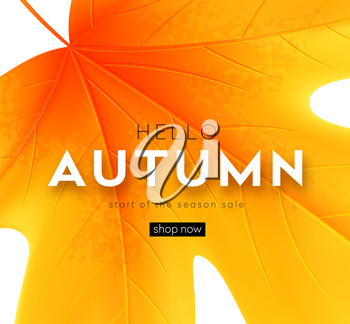 Autumn poster with lettering and yellow autumn maple leaves. Vector illustration EPS10