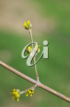 Spring bud. Nature composition.