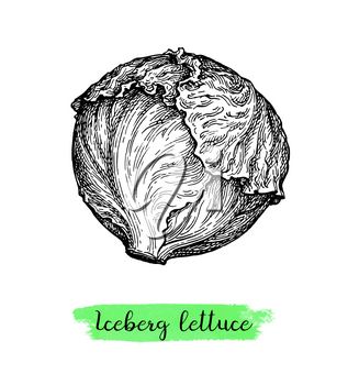 Lettuce iceberg. Ink sketch isolated on white background. Hand drawn vector illustration. Retro style.