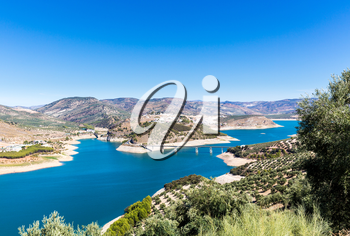 Olive trees in rows reaching to the far distance on hills and mountain sides above Lake Iznajar in Andalucia in Southern Spain