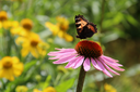 Butterfly on a flower. The insects in the terrarium.
