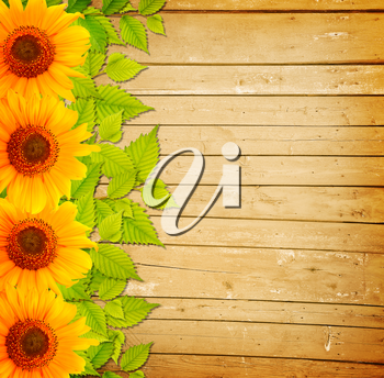Background with wooden fence, green leaves and sunflowers