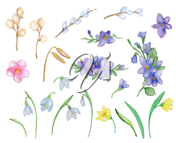 Set of hand drawn spring watercolor flowers and green leaves