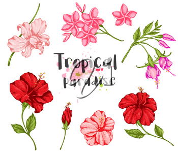 Set of vintage tropical flowers. Hand drawn vector illustration.
